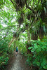 Tramping through lush Northland forest, Bream Head Scenic Reserve