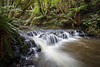 Purakanui River, Catlins