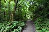 Forest, Hakarimata Scenic Reserve
