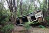Collapsed hut, Herekino Forest