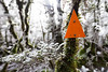 DOC triangle in snow covered beech forest, Longwood Range