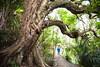 Walker and Puriri tree, Mount Manaia, Whangarei