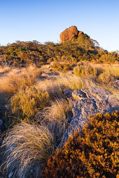 Alpine scrub and grassland. The Rocks, Richmond Ranges