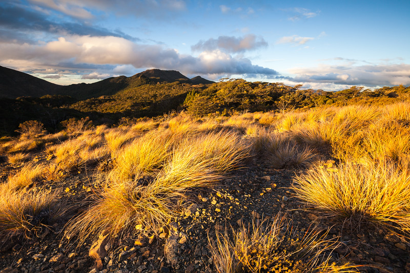 Tussock covered hillside, The Rocks, Mount Richmond Forest Park