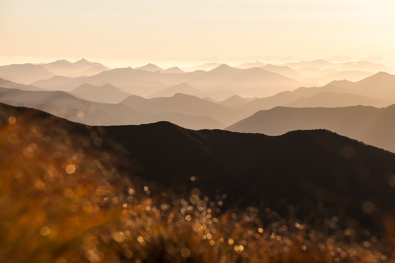 Folded hills, Mount Richmond Forest Park, Nelson/Marlborough
