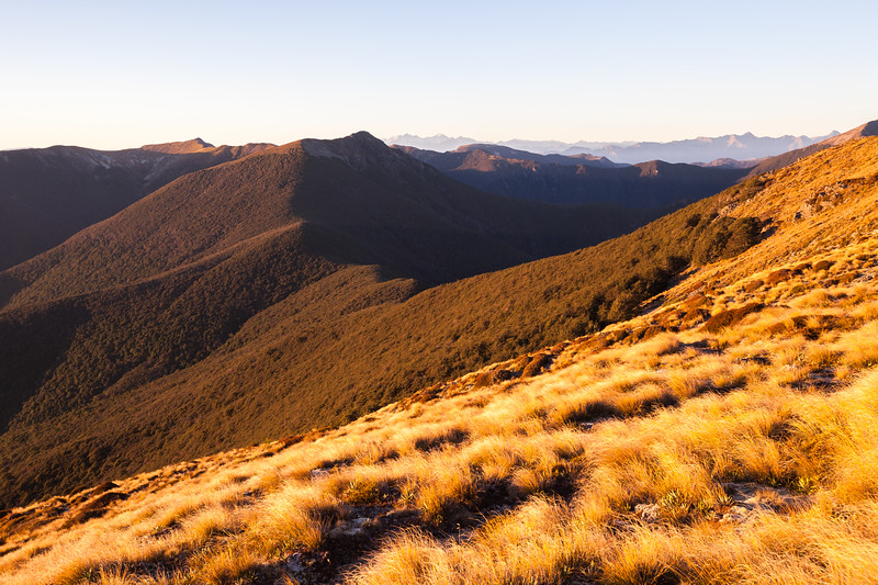 Tussock and beech forest, Mount Starveall, Mount Richmond Forest Park