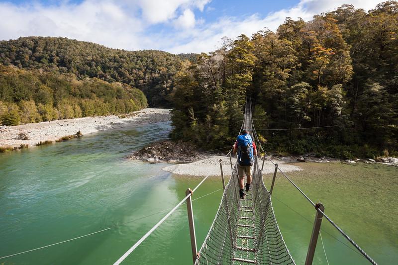 Male tramper crossing swingbridge, Pelorus River, Mount Richmond Forest Park
