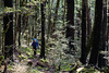 Tramping in beech forest, Travers Valley, Nelson Lakes National Park