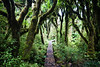 Pirongia Forest Park