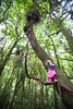 Young girl climbs tree in Pirongia Forest Park, Waikato
