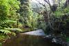 Mangapukahukahu stream, Puketi Omahuta Forest, Northland
