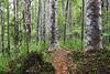 Puketi Omahuta Forest, Northland