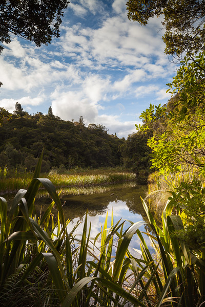 Wetland and forest at Apple Dam campsite, Te Araroa Trail, Northland