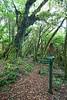Forest interior and trail signage, Pureora Forest, Hauhungaroa Range