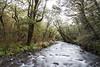 Wairaki River & beech forest, Takitimu Conservation Area