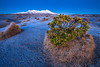 Mount Ruapehu and hebe during a frosty winter morning, Rangipo Desert (Te Onetapu), Tongariro National Park