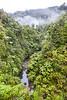 Forest, Kaiwhakauka Valley, Whanganui National Park