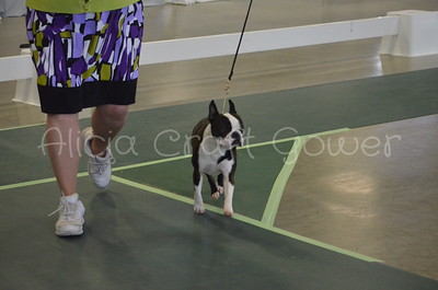 Helena Dog Show016