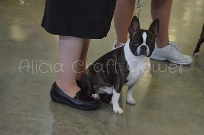 Helena Dog Show025