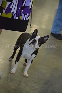 Helena Dog Show032