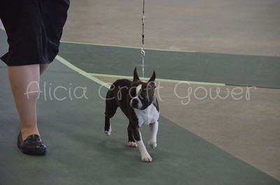 Helena Dog Show012