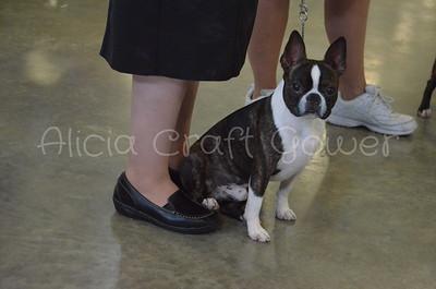 Helena Dog Show024