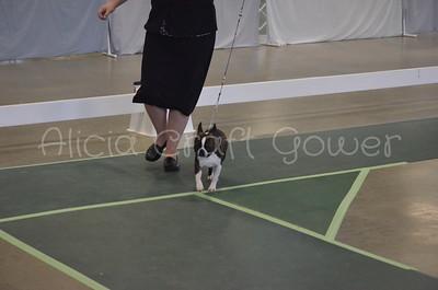 Helena Dog Show006