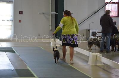 Helena Dog Show013