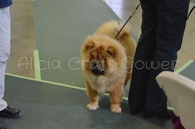 Helena Dog Show093