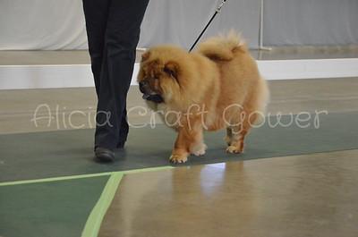 Helena Dog Show095