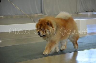 Helena Dog Show105