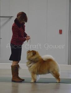 Helena Dog Show317