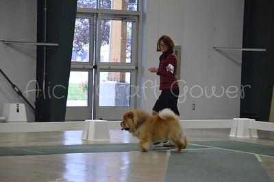Helena Dog Show315
