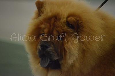 Helena Dog Show096