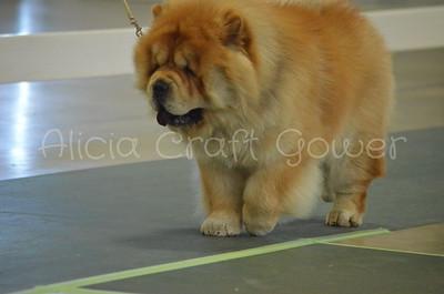 Helena Dog Show104