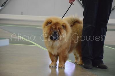 Helena Dog Show099