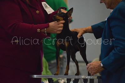 Helena Dog Show159