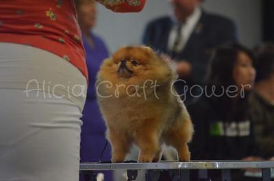Helena Dog Show167