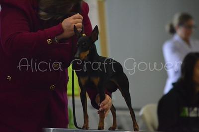 Helena Dog Show152