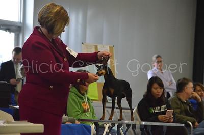 Helena Dog Show156