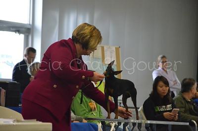 Helena Dog Show155