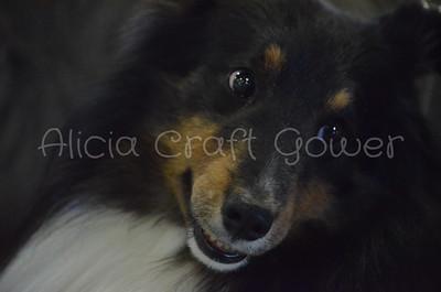 Helena Dog Show001