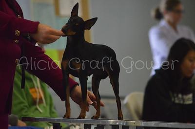 Helena Dog Show154
