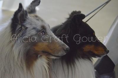 Helena Dog Show003