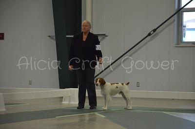 Helena Dog Show236
