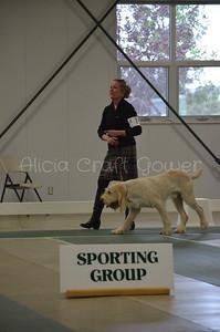 Helena Dog Show225