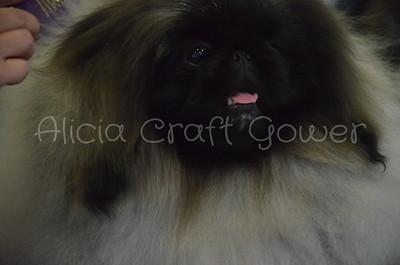 Helena Dog Show126