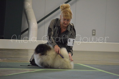 Helena Dog Show137
