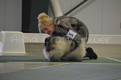 Helena Dog Show139