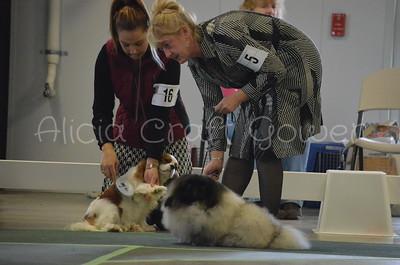 Helena Dog Show165